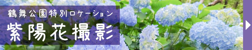 鶴舞公園紫陽花が撮影にピッタリな季節に